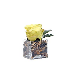 Yellow Rose In Glass Square