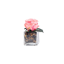 Pink Rose In Glass Square