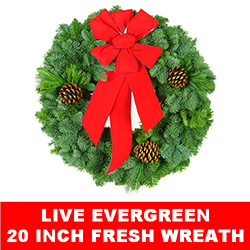 Live Evergreen Fresh Christmas Wreath