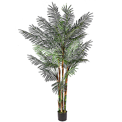 8 Foot Potted Reed Palm Tree