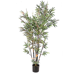 7 Foot Potted Black Bamboo Tree