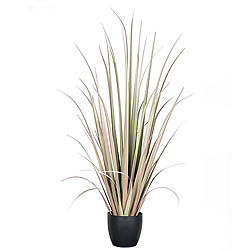 6 Foot Brown Gladiolus Grass In A Pot