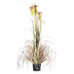 4 Foot Brown Reed Grass In A Black Pot