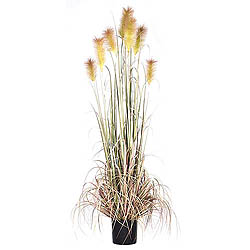 6 Foot Brown Reed Grass In A Black Pot