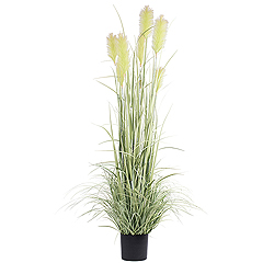 4 Foot Green Reed Grass In A Black Pot