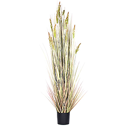 6 Foot Grain Grass in A Black Pot