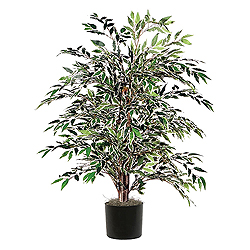 4 Foot Variegated Smilax Bush