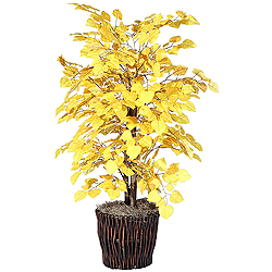 4 Foot Yellow Aspen Bush Potted Plant