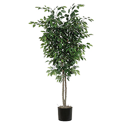 6.5 Foot Ficus Deluxe Potted Plant