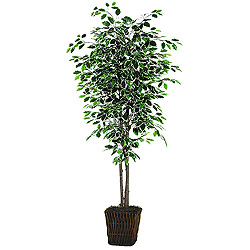 6 Foot Variegated Deluxe Bush
