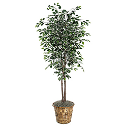6 Foot Variegated Ficus Deluxe Potted Artificial Plant