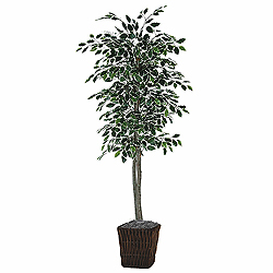6 Foot Varigated Ficus Square Willow Artificial Plant