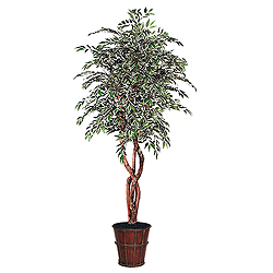6 Foot Variegated Smilax Heartland Plant Embossed Pot