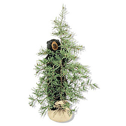 6 Foot Tahoe Tree With Black Bear Decoration